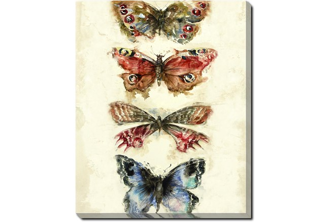 40X50 Butterflies With Gallery Wrap Canvas - 360