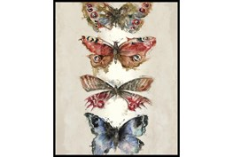 42X52 Butterflies With Black Frame