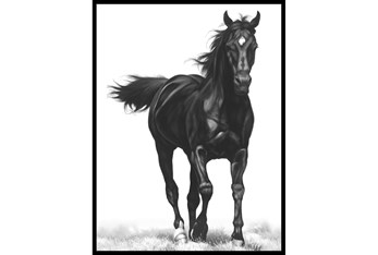 32X42 B&W Strong Stallion With Black Frame