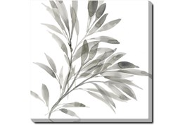 36X36 Watercolor Leaf Grey With Gallery Wrap Canvas